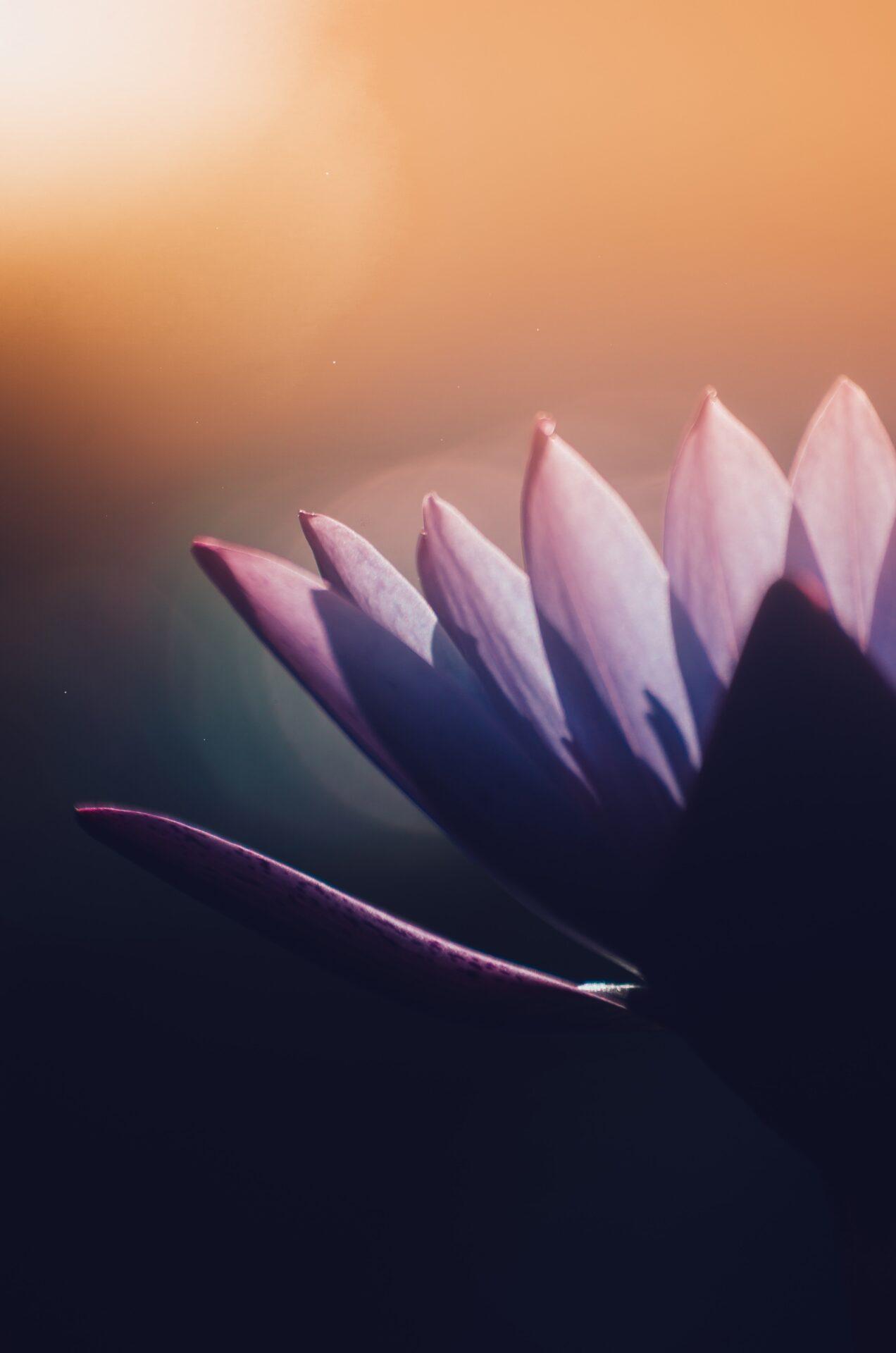 closeup photography of purple flower