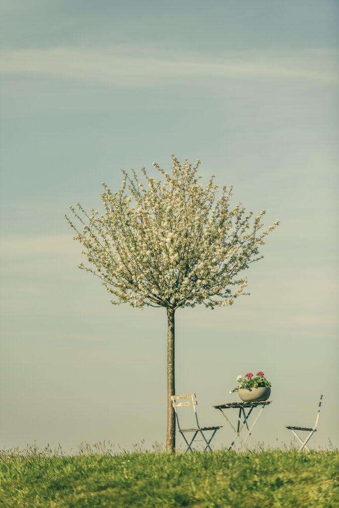 leafless tree near body of water